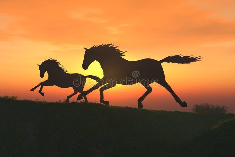 Foal royalty free illustration