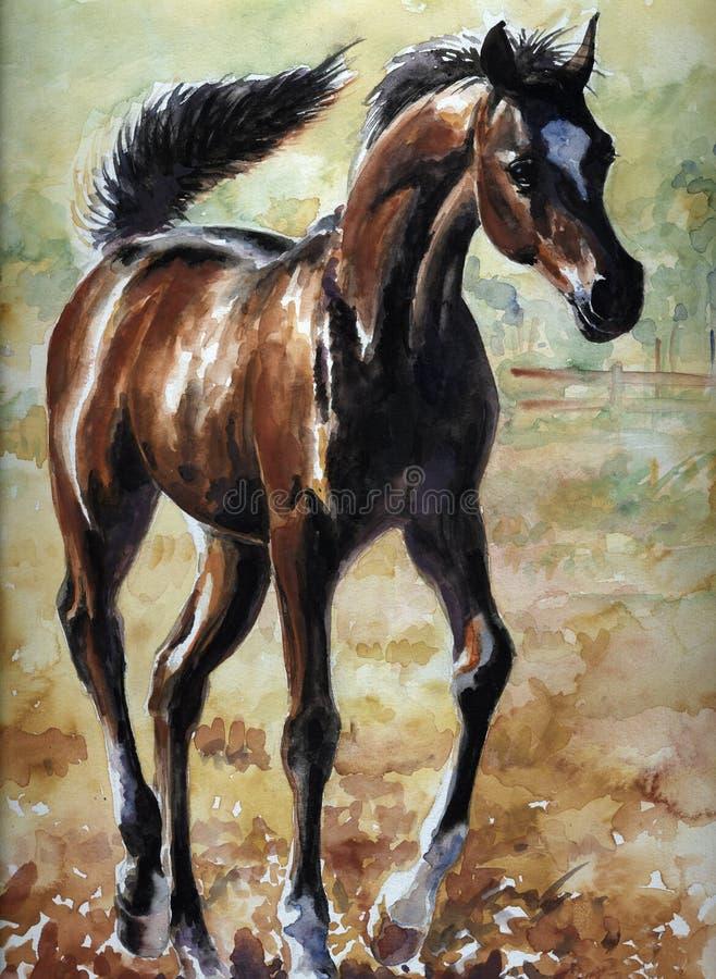 Foal royalty illustrazione gratis