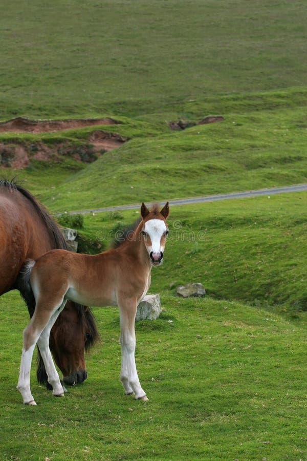 Foal Beauty Stock Photos