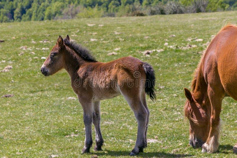 Foal en merg in fel groen beemdje royalty-vrije stock fotografie