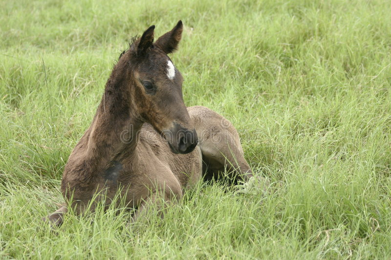 Foal in the grass stock photo