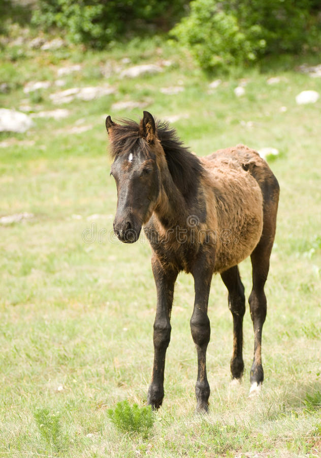 Foal Horse royalty free stock images