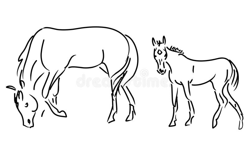 Download Foal and mare stock illustration. Image of decathlon - 11635377
