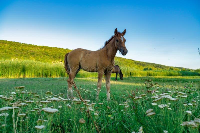 Foal met een merrie royalty-vrije stock afbeeldingen