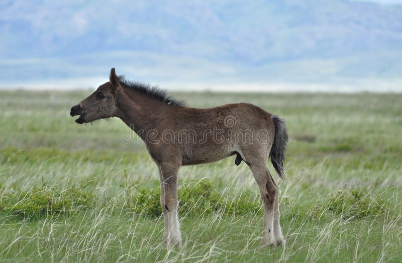 Foal on a pasture. stock photos