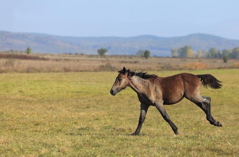 Download Foal running stock image. Image of movement, motion, loose - 11726265