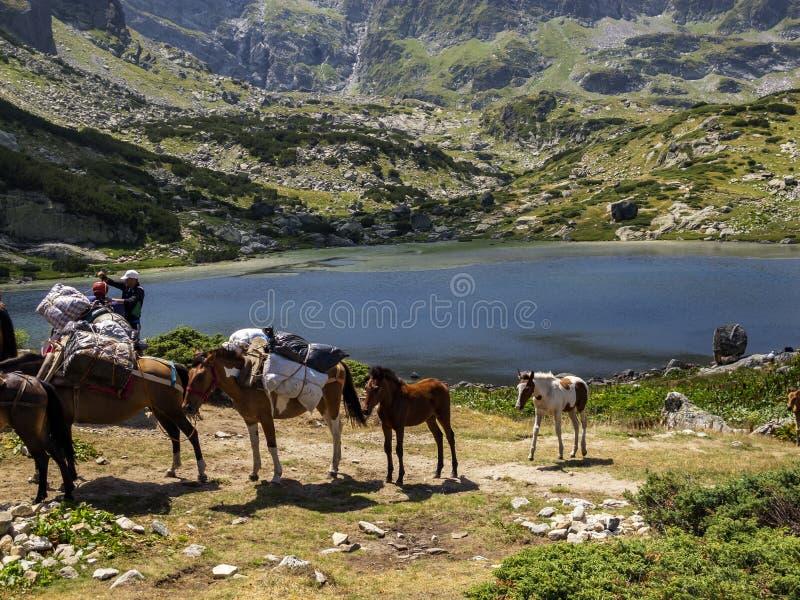 Foals και τα άλογα πακέτων από τη λίμνη ψαριών, ένα μη αναγνωρισμένο άτομο φορτώνουν ένα καματερό για μια μεταφορά αποσκευών υψηλ στοκ φωτογραφία με δικαίωμα ελεύθερης χρήσης