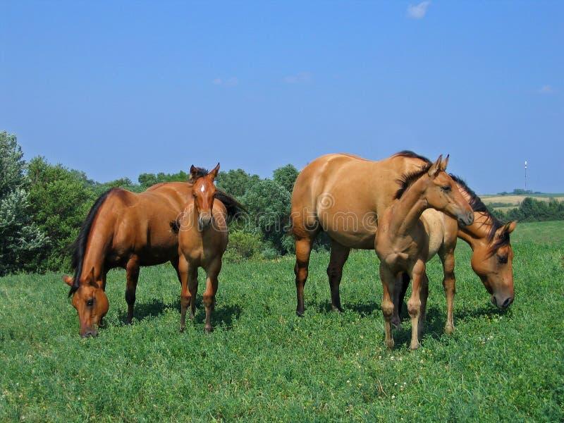 foals φραγμάτων δύο τους στοκ φωτογραφία με δικαίωμα ελεύθερης χρήσης