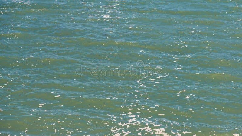 Foamy, falista woda morska pod światłem słonecznym, obrazy royalty free