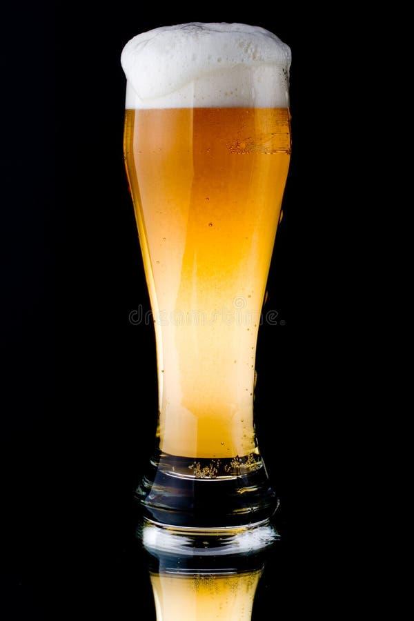 foamy nytt för öl royaltyfri foto