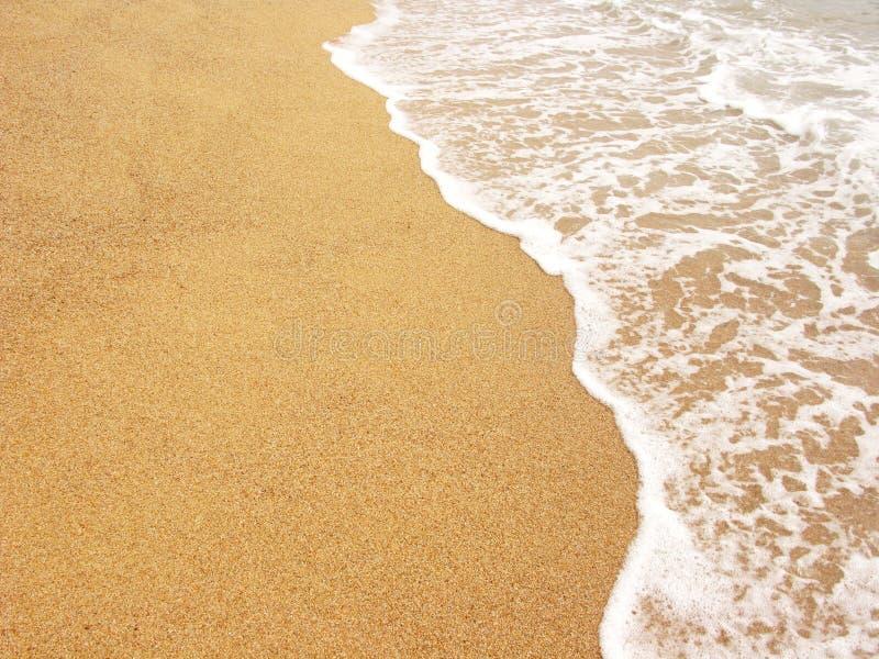 Foamy sea shore royalty free stock photo