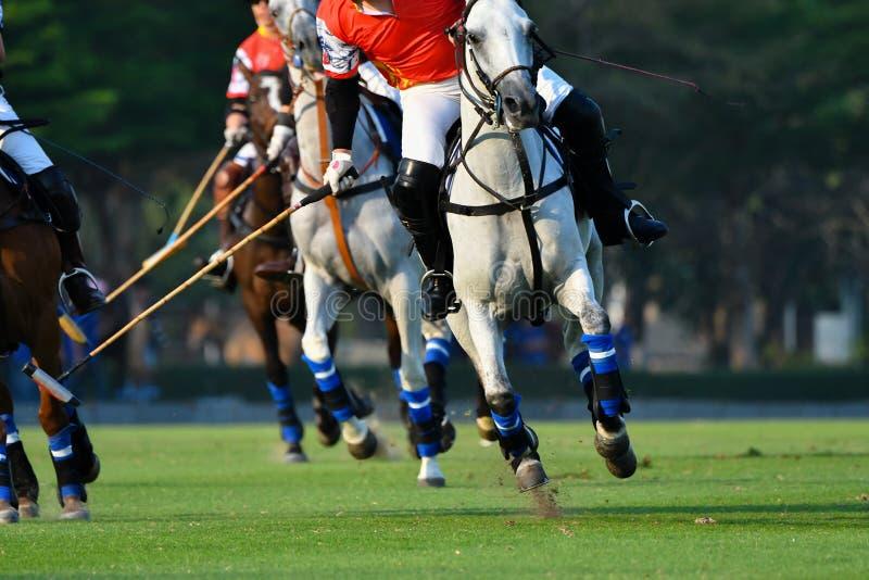 Focalisez le cheval dans le match de polo photographie stock
