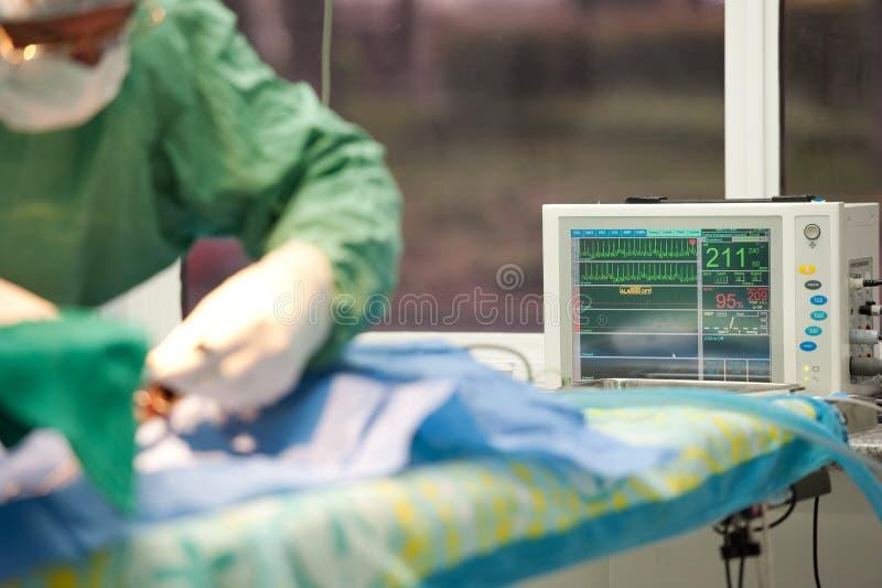 Focalize em um monitor da vida para um gato sob a anestesia imagens de stock