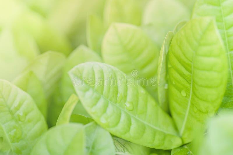 Foco ascendente e macio do fim das folhas verdes Fundo verde da natureza imagem de stock