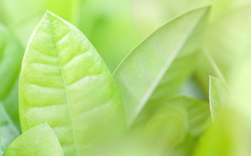 Foco ascendente e macio do fim das folhas verdes Fundo verde da natureza imagem de stock royalty free