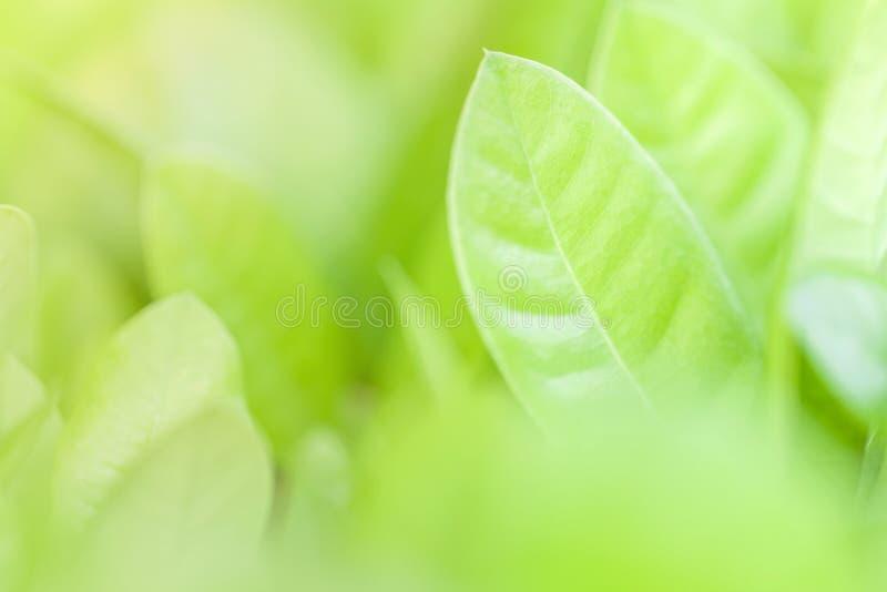 Foco ascendente e macio do fim das folhas verdes Fundo verde da natureza fotografia de stock