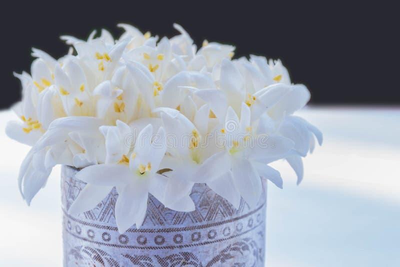 Foco borroso y suave de la suavidad del hortensis de Millingtonia, flor del Bignoniaceae con el fondo blanco y negro del espacio  fotografía de archivo