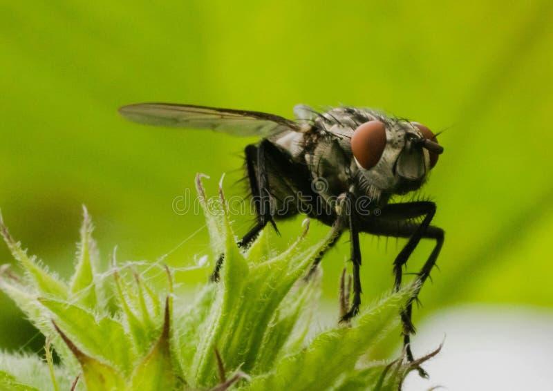 Foco de la macro de los insectos imagenes de archivo