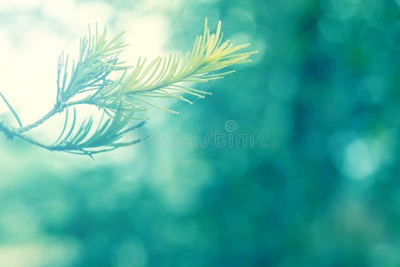Foco macio abstrato da parte da árvore com a iluminação azul fresca macia foto de stock royalty free