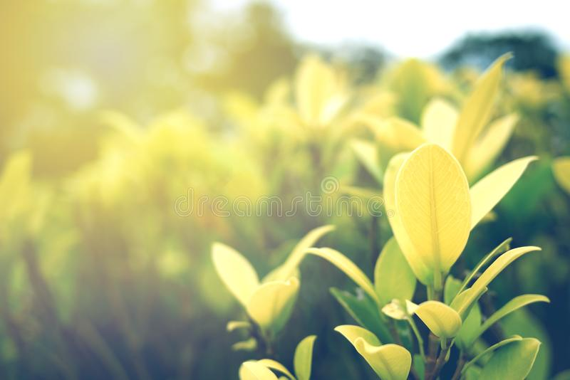 Foco macio da folha verde com o close up na opinião da natureza no fundo borrado das hortaliças no jardim com espaço da cópia foto de stock