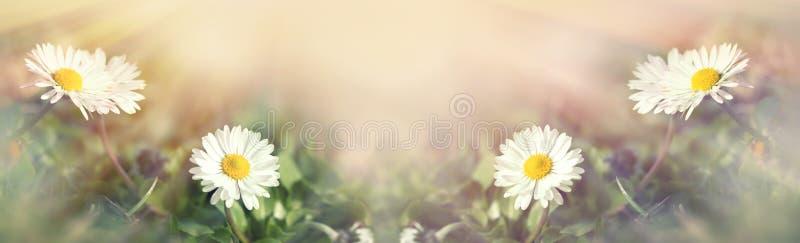 Foco macio na florescência - estrado de florescência da mola fotografia de stock