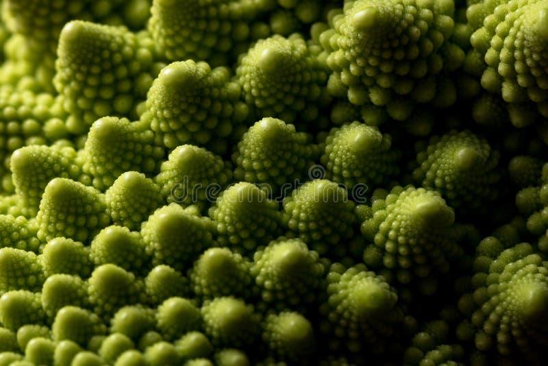 Foco macro de la col fresca del romanesco, selectivo vegetal imagen de archivo