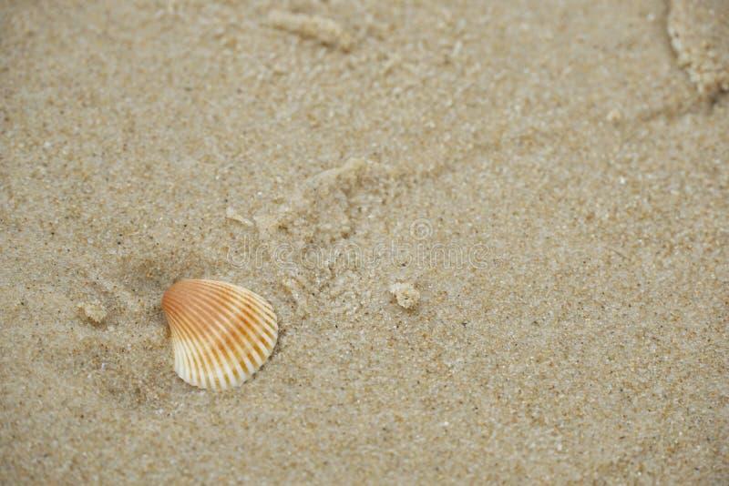 Foco selectivo de cáscaras en la playa de la arena como fondo fotos de archivo