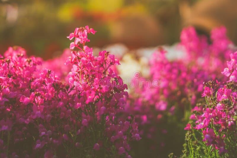 Foco selectivo de flores coloridas hermosas imagen de archivo libre de regalías