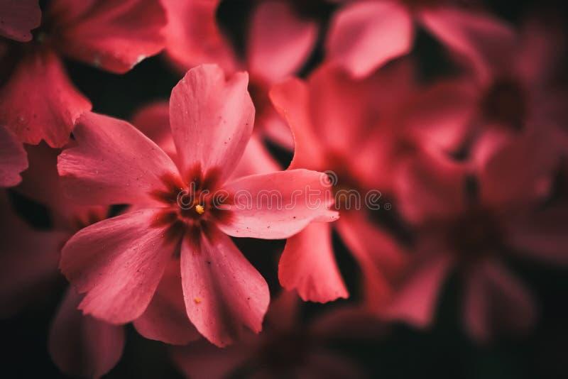Foco selectivo de flores coloridas hermosas imágenes de archivo libres de regalías