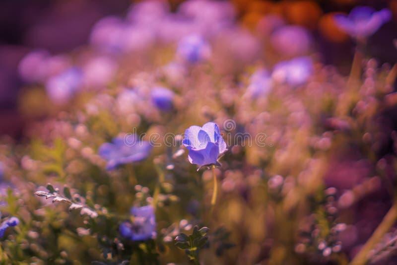 Foco selectivo de flores coloridas hermosas imagen de archivo