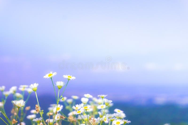 Foco selectivo de flores coloridas hermosas fotografía de archivo