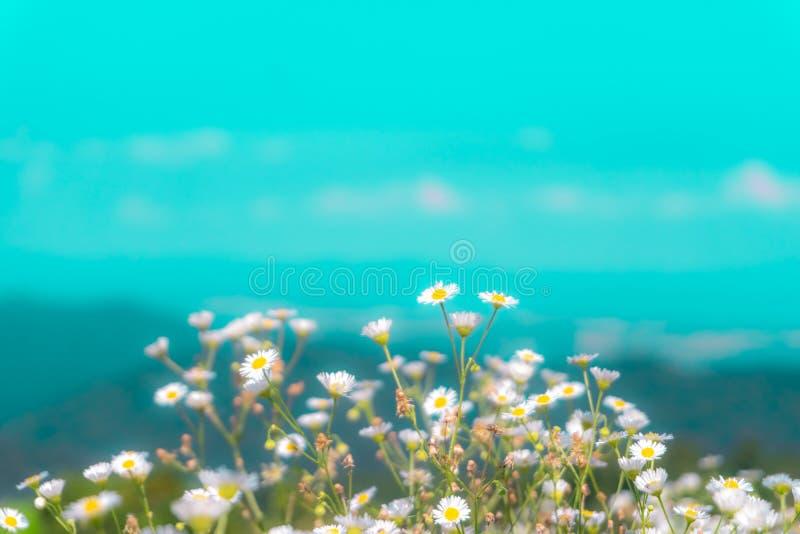 Foco selectivo de flores coloridas hermosas foto de archivo libre de regalías