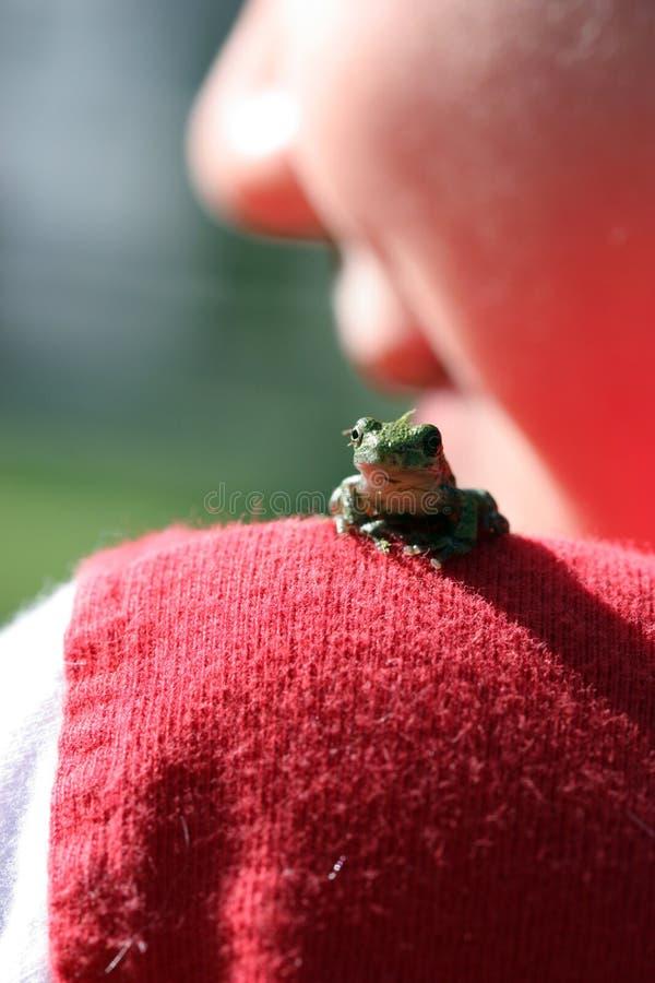 Foco selectivo de la pequeña rana en el hombro del niño imagen de archivo libre de regalías