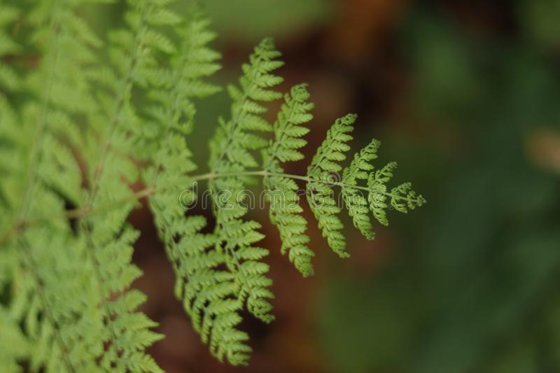 Foco selectivo de la vegetación de la hoja del helecho en primero plano fotografía de archivo