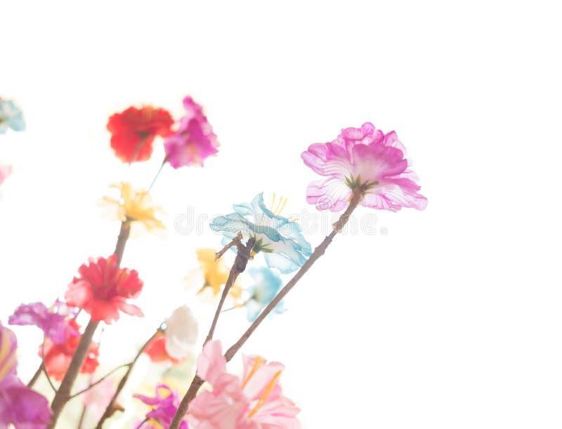 Foco selectivo de las flores coloridas Aislado en el fondo blanco fotografía de archivo libre de regalías