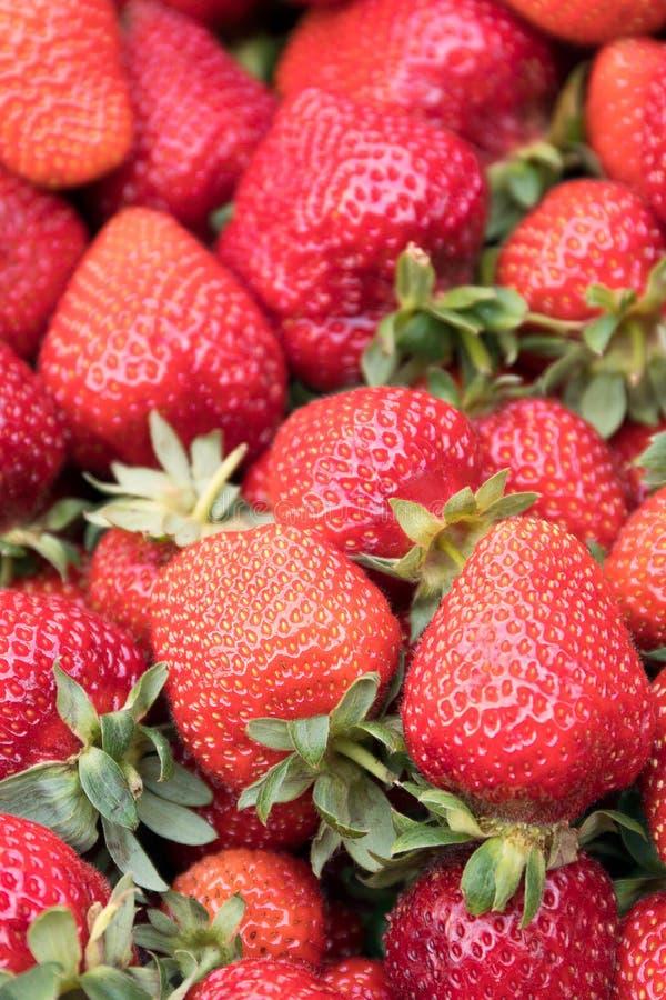 Foco selectivo de las fresas frescas imagenes de archivo