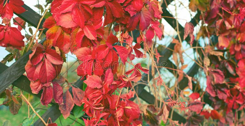Foco selectivo del parque natural del follaje de la planta del otoño de la bandera de la cerca de Beautiful del paisaje retro de  imagenes de archivo