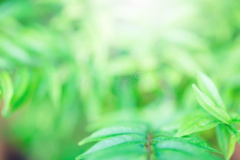 Foco selectivo a la opinión de la naturaleza de la hoja verde en fondo borroso del verdor imagen de archivo libre de regalías
