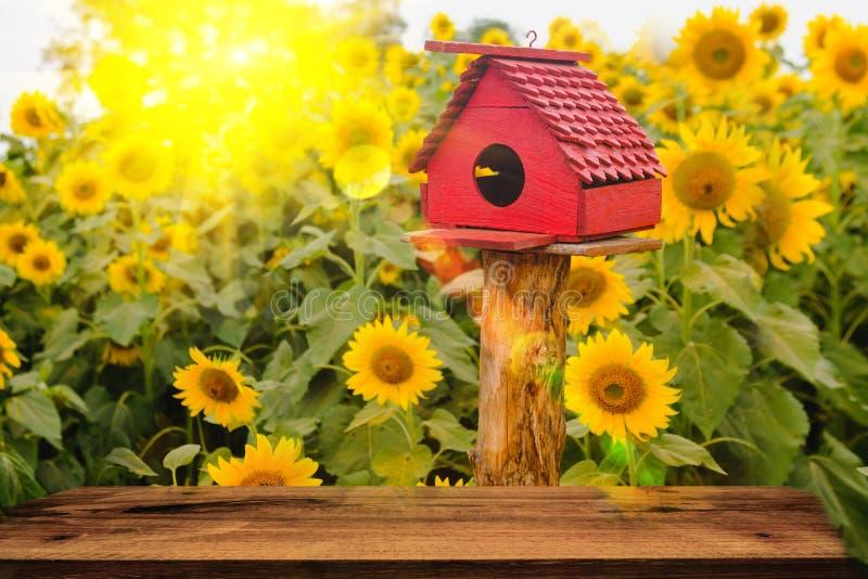 Foco selectivo y suave Casas del pájaro en fondo del campo de los girasoles con efecto de la llamarada de la iluminación imagenes de archivo