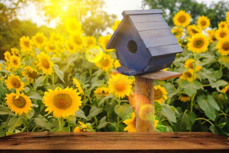 Foco selectivo y suave Casas del pájaro en fondo del campo de los girasoles con efecto de la llamarada de la iluminación imagen de archivo libre de regalías