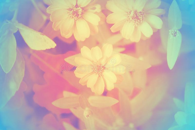 Foco suave de flores hermosas con los filtros de color fotos de archivo