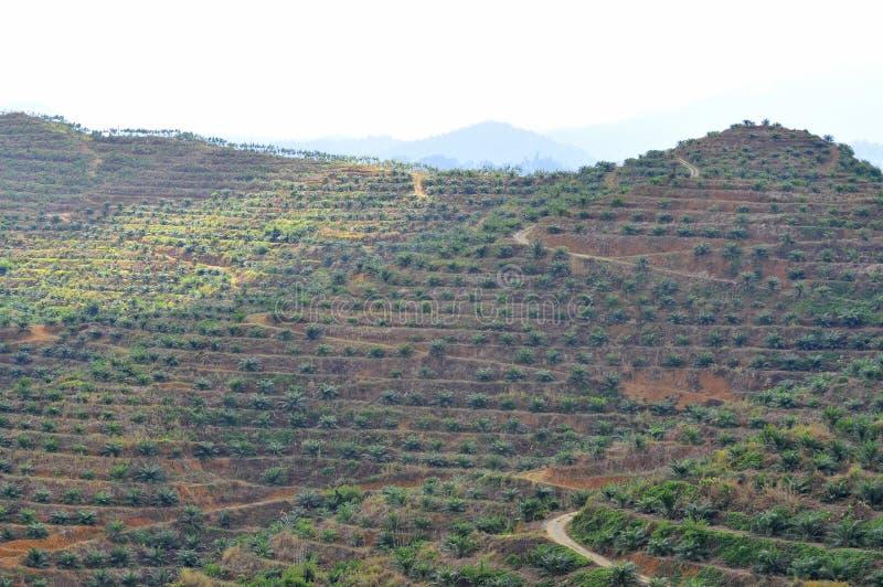 Foco suave de la visión desde la palmera lejana del aceite de la replantación en la colina imagen de archivo
