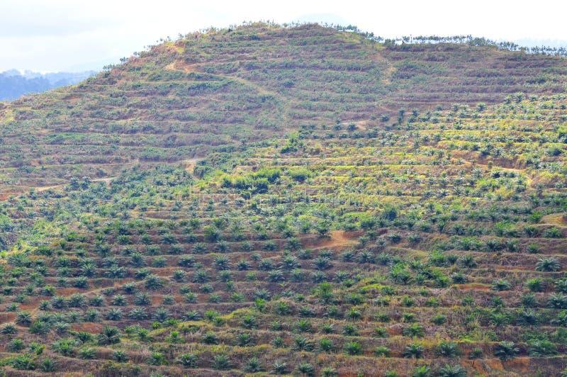Foco suave de la visión desde la palmera lejana del aceite de la replantación en la colina fotografía de archivo