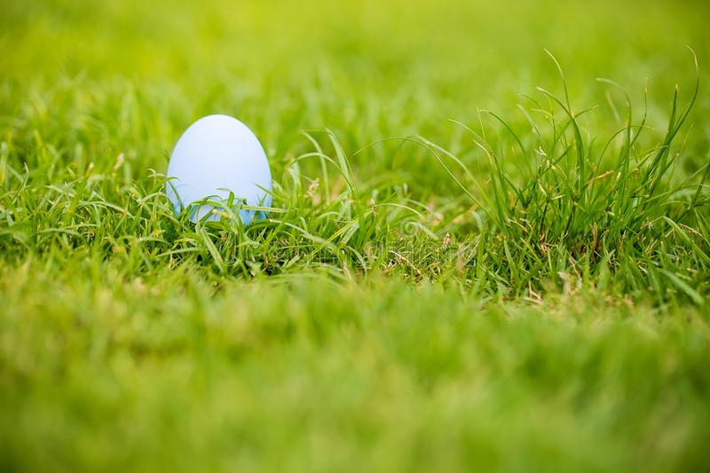 Focus colorful an easter egg on the grass field. Eater egg on the garden. sign of easter`s day festival. vivid egg on green field. royalty free stock photo