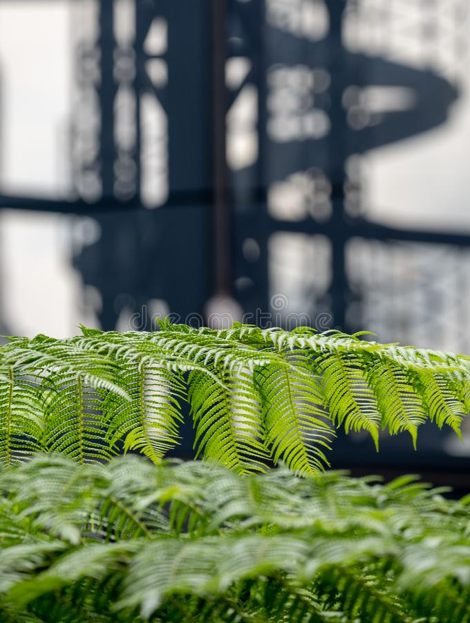 In focus in the foreground, green ferns in the garden at Cannon Bridge Roof Garden. In soft focus in the background, spiral stairs. In focus in the foreground stock photography