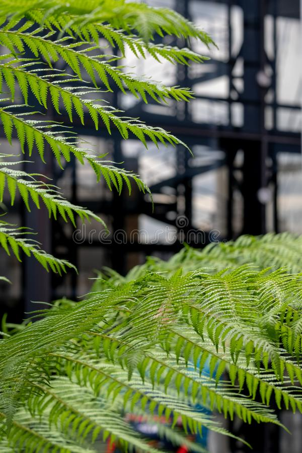 In focus in the foreground, green ferns in the garden at Cannon Bridge Roof Garden. In soft focus in the background, spiral stairs. In focus in the foreground stock photo