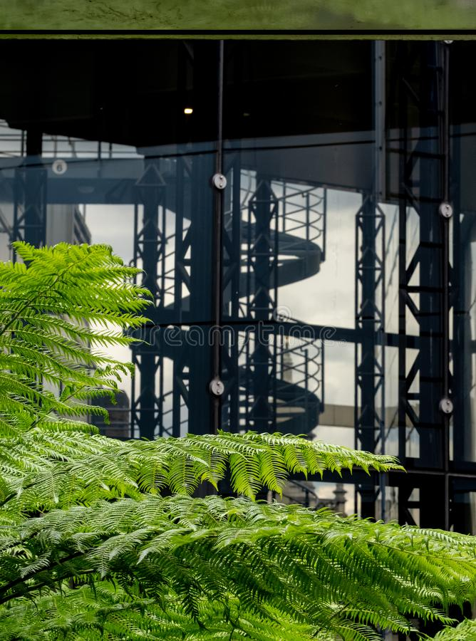 In focus in the foreground, green ferns in the garden at Cannon Bridge Roof Garden. In soft focus in the background, spiral stairs. In focus in the foreground stock images