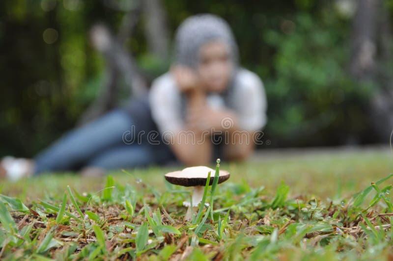Focus on mushroom stock photography