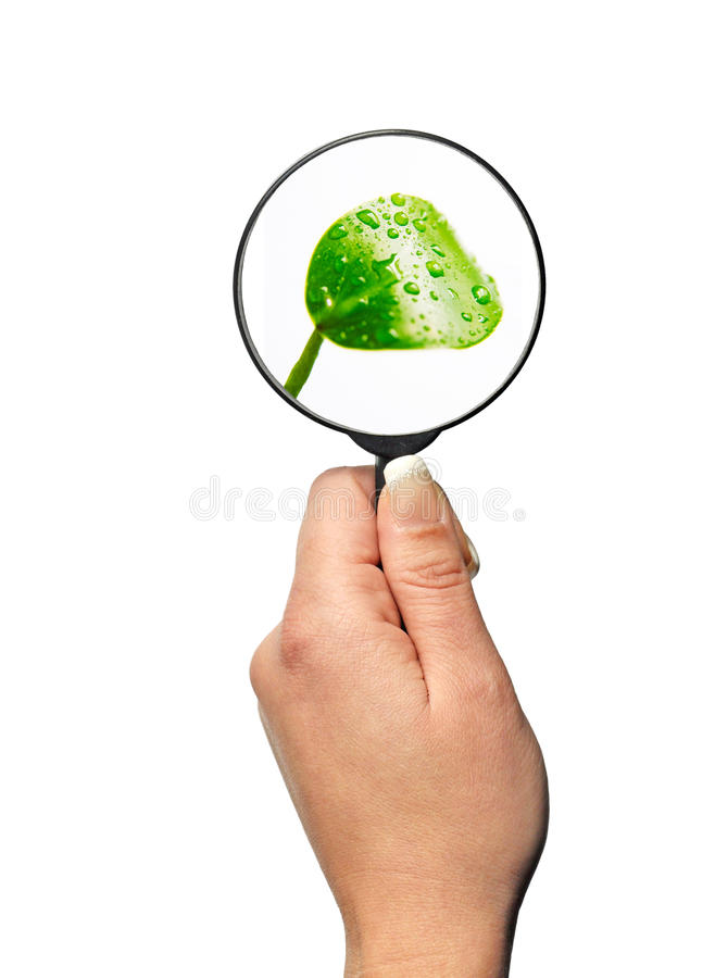 Focus on plant, nature & science stock image