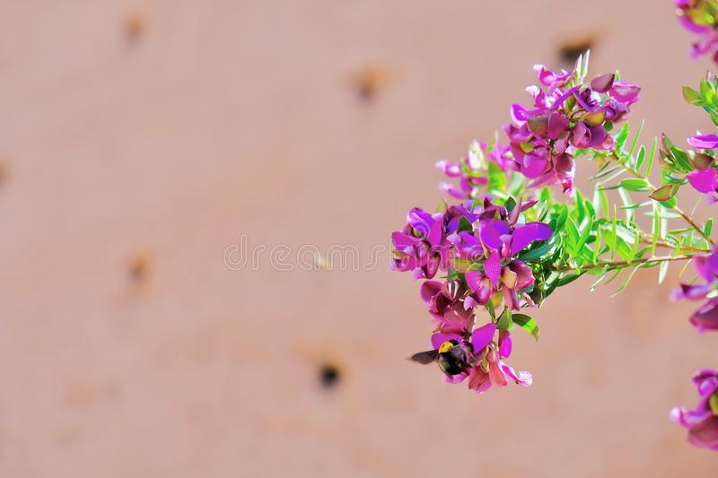 Focus Photography of Pink Petaled Flowers royalty free stock photo